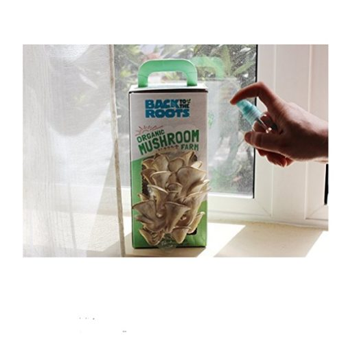 This image shows oyster mushrooms growing out of the kit.