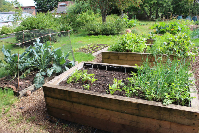 crops grown on raised beds