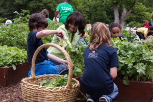 A kitchen garden at the White House. Yes, that's Mrs. Obama doing some work on her kitchen garden!