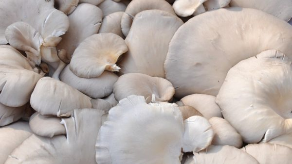Organic Mushroom Grow Kit Takes Us Back To The Roots Of Food