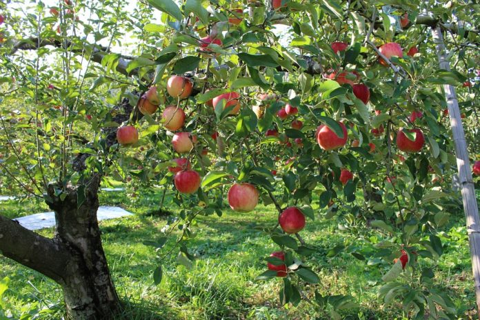 Farms and orchards, like the one pictured here, can help you save a ton of cash on buying your fruit and veg.