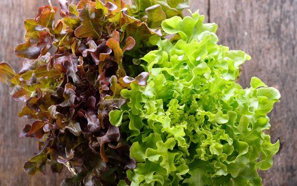 looseleaf lettuce of two varieties