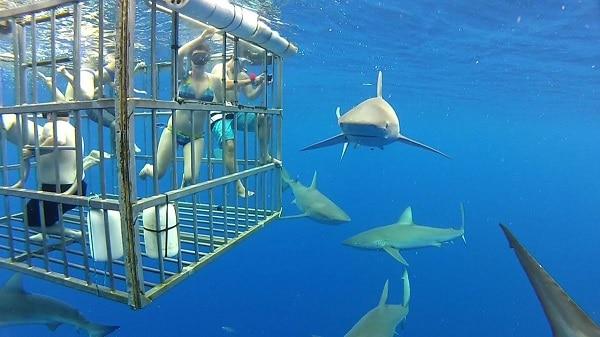 Shark Week Giveaway 4