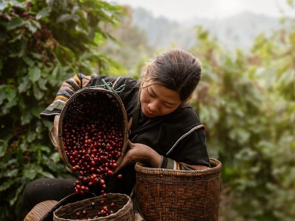 Sustainable Coffee Giveaway 7